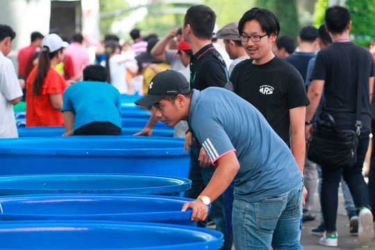 Tưng bừng hội thi cá Koi tại Thảo Cầm Viên - Ảnh 5.