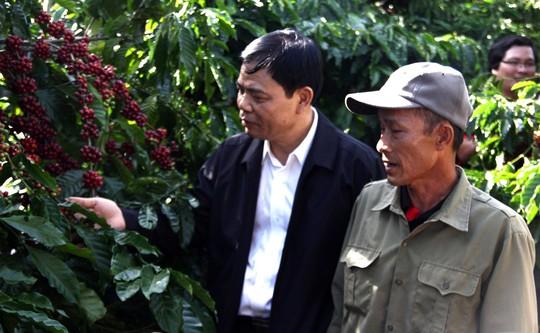 Cà phê Việt yếu từ tổ chức sản xuất đến chế biến - Ảnh 6.