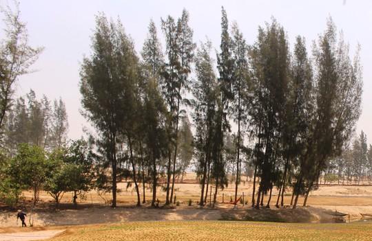 Khu vực chuyển giao đất rừng phòng hộ làm dự án sân golf Ảnh: HỒNG ÁNH