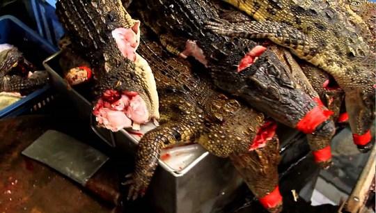 """Vì sao thịt cá sấu """"cháy hàng"""" ở Thái Lan? - Ảnh 8."""