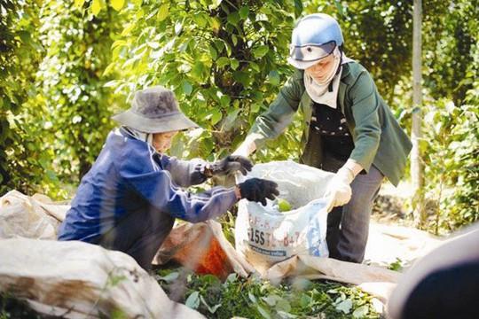 Nông sản Việt và thách thức từ Campuchia