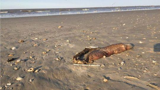 """Quái vật biển"""" bí ẩn trôi dạt vào Texas sau bão Harvey - Ảnh 3."""