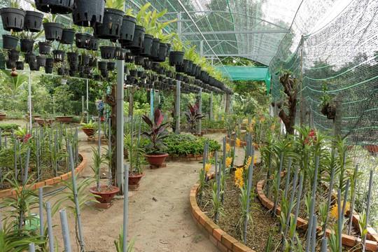 Nông nghiệp gắn với homestay trên quê hương Bác Tôn - Ảnh 1.