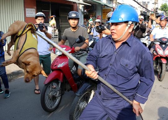 Chủ ngơ ngác nhìn chó thả rông bị bắt - Ảnh 3.
