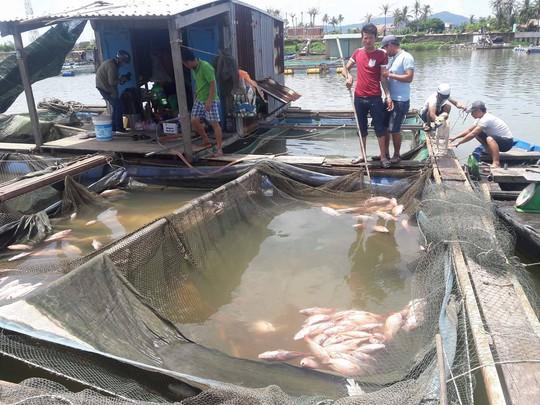 Đà Nẵng: Hơn 20 tấn cá nuôi chết hàng loạt chưa rõ nguyên nhân