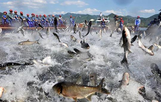 Sự thật kinh hoàng của lợn, cá, tôm... từ Trung Quốc - Ảnh 1.