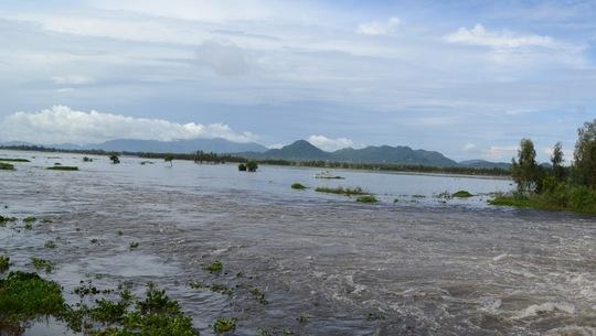 Xả đập, lũ cuồn cuộn chảy vào vùng Tứ giác Long Xuyên - Ảnh 6.