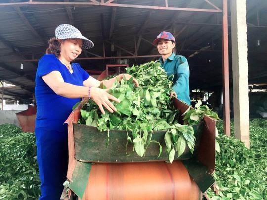Mang chè Việt ra thế giới - Ảnh 1.