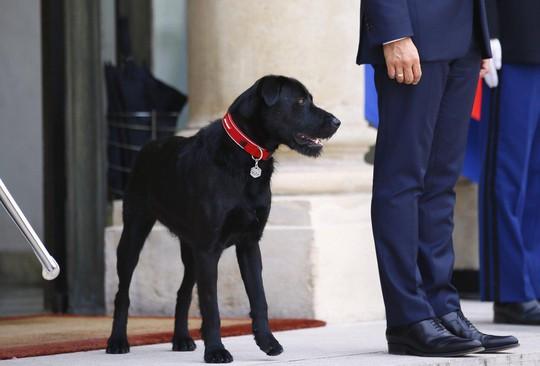 Chó cưng của tổng thống Pháp làm 3 quốc vụ khanh bó tay - Ảnh 3.