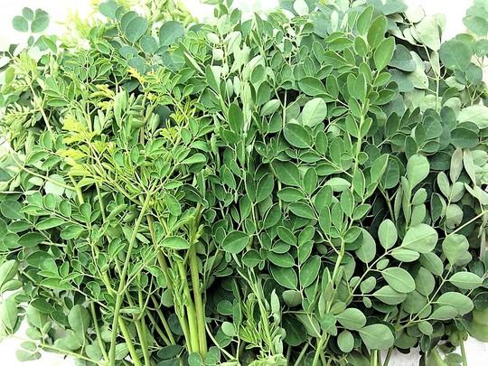 Thơm ngon, bổ dưỡng canh rau chùm ngây nấu tôm - Ảnh 2.