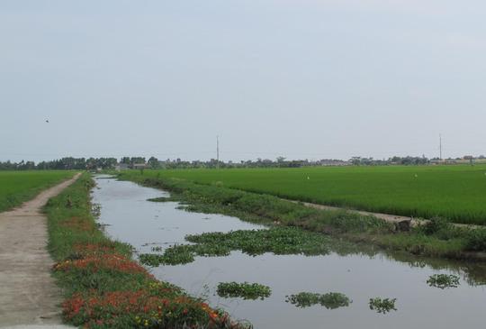 Ngỡ ngàng những con đường hoa rực rỡ làng quê miền Bắc - Ảnh 26.