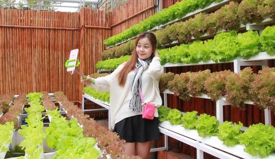 Du lịch vườn hướng canh nông công nghệ cao cũng thu hút rất đông bạn trẻ, khách tham quan.