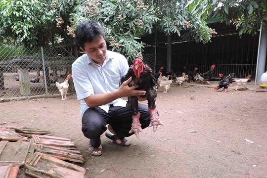 Vua gà Đông Tảo ở Hưng Yên - Ảnh 1.