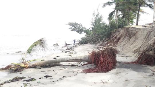 Chùm ảnh: Bờ biển Cửa Đại tan hoang hơn 2 km - Ảnh 3.