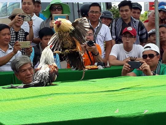 Chọi gà tre Tân Châu : Hết xuýt xoa đến cười sảng khoái - Ảnh 10.