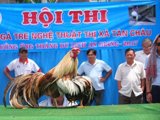 Chọi gà tre Tân Châu : Hết xuýt xoa đến cười sảng khoái - Ảnh 8.