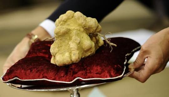 Loài nấm thần dược phòng the giá 7 tỉ đồng/cây, đại gia cũng chùn tay - Ảnh 1.