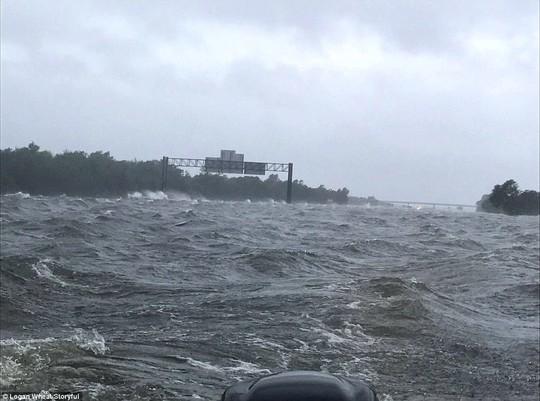 """Mỹ: """"Đảo kiến lửa"""" xuất hiện trong bão Harvey - Ảnh 8."""