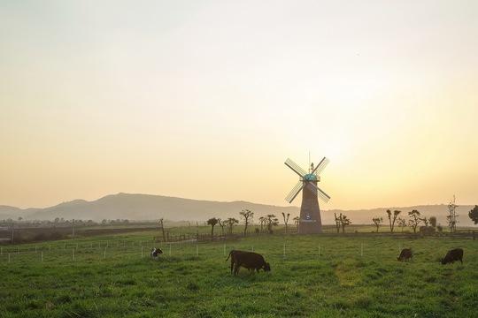 Hành trình ra mắt sữa tươi 100% organic tiêu chuẩn châu Âu đầu tiên tại Việt Nam - Ảnh 1.