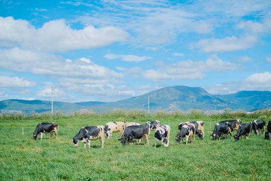 Hành trình ra mắt sữa tươi 100% organic tiêu chuẩn châu Âu đầu tiên tại Việt Nam - Ảnh 3.