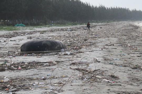 Hơn 1 km bờ biển Đà Nẵng tràn ngập hàng trăm tấn rác - Ảnh 4.