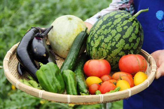 Sản xuất hữu cơ phải áp dụng các quy tắc nghiêm ngặt