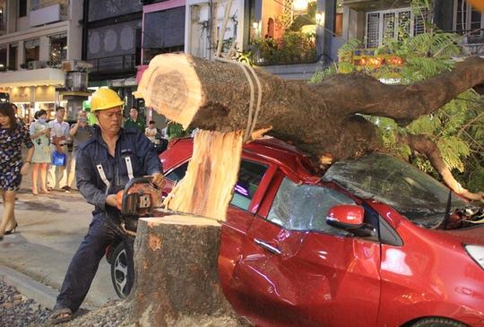 Cây xanh bật gốc đè xế hộp gần phố đi bộ Nguyễn Huệ - Ảnh 3.