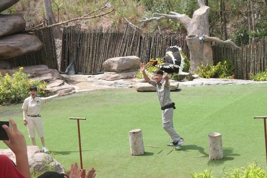Mãn nhãn với màn biễu diễn thú ở Safari Phú Quốc - Ảnh 11.