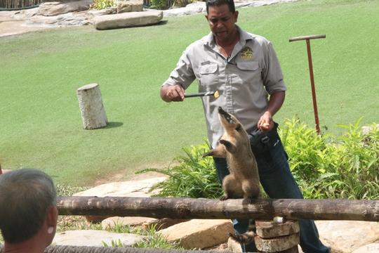 Mãn nhãn với màn biễu diễn thú ở Safari Phú Quốc - Ảnh 9.