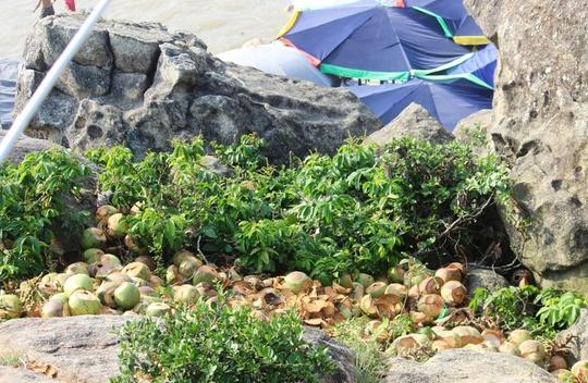 Vỏ dừa chất thành đống ở khu vực gần đền Độc Cước, TP Sầm Sơn (Thanh Hóa) - Ảnh chụp sáng ngày 3-5