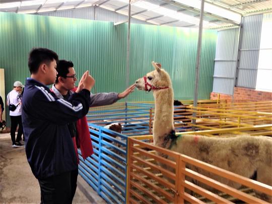 Trải nghiệm tuyệt vời tại vườn thú Úc ở Đà Lạt - Ảnh 15.