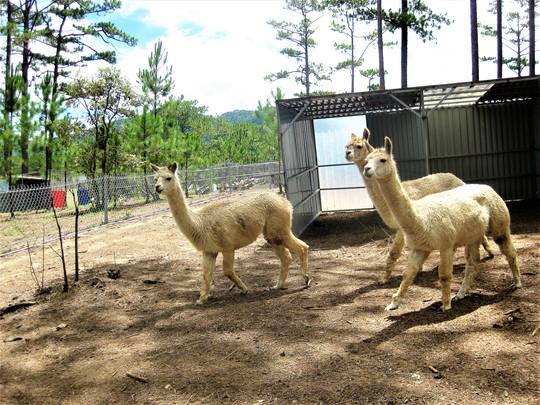 Trải nghiệm tuyệt vời tại vườn thú Úc ở Đà Lạt - Ảnh 8.