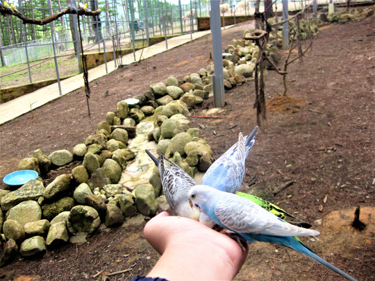 Trải nghiệm tuyệt vời tại vườn thú Úc ở Đà Lạt - Ảnh 14.