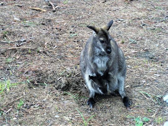 Trải nghiệm tuyệt vời tại vườn thú Úc ở Đà Lạt - Ảnh 11.