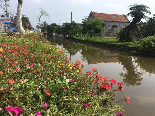 Ngỡ ngàng những con đường hoa rực rỡ làng quê miền Bắc - Ảnh 7.