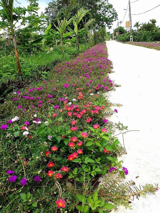 Ngỡ ngàng những con đường hoa rực rỡ làng quê miền Bắc - Ảnh 5.