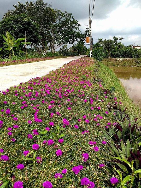 Ngỡ ngàng những con đường hoa rực rỡ làng quê miền Bắc - Ảnh 3.