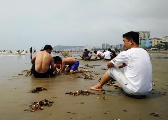 Bèo tây phủ kín bãi biển gần trưa ngày 2-5