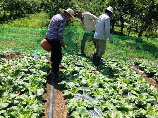 Xuất ngoại học... làm nông nghiệp
