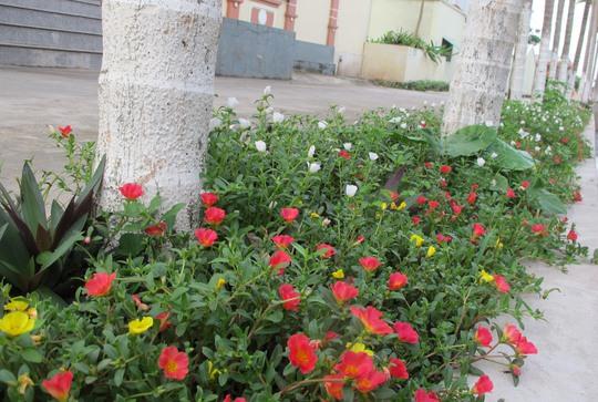 Ngỡ ngàng những con đường hoa rực rỡ làng quê miền Bắc - Ảnh 12.