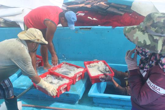 Trúng đậm cá ngừ sọc dưa, ngư dân thu tiền tỉ - Ảnh 2.