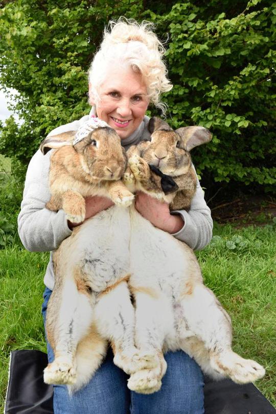Bà Annette Edwards và chú thỏ lớn nhất thế giới Darius (phải). Ảnh: Cater News Agency