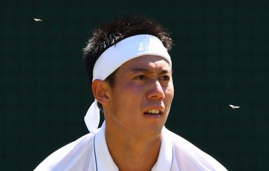 Wimbledon khổ vì kiến cánh - Ảnh 4.