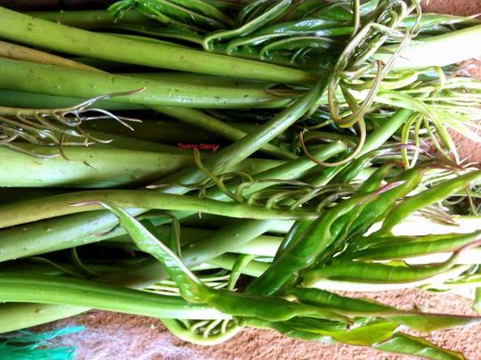 Đọt non cây rau móp đã được thu hái