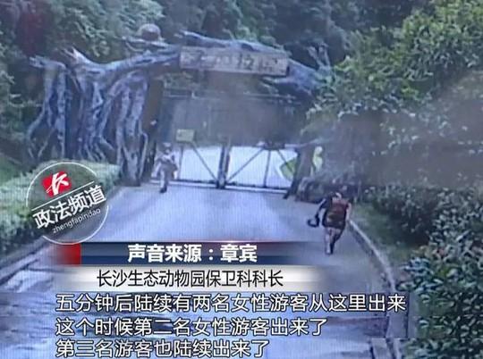 Khách Trung Quốc vượt tường trốn vé, suýt đối mặt hổ dữ - Ảnh 1.