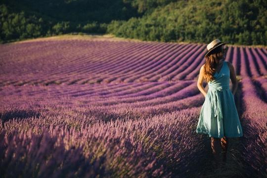Thiên đường oải hương tràn sắc tím giữa lòng Provence - Ảnh 3.
