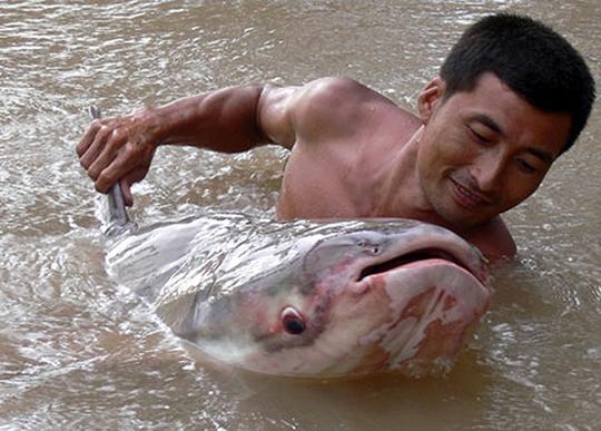 Ký ức về túi cá Biển Hồ - Ảnh 2.