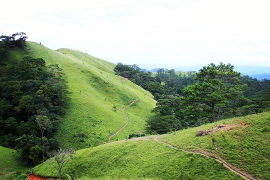 Đưa nhau đi trốn ở rừng Tà Năng- Phan Dũng - Ảnh 1.