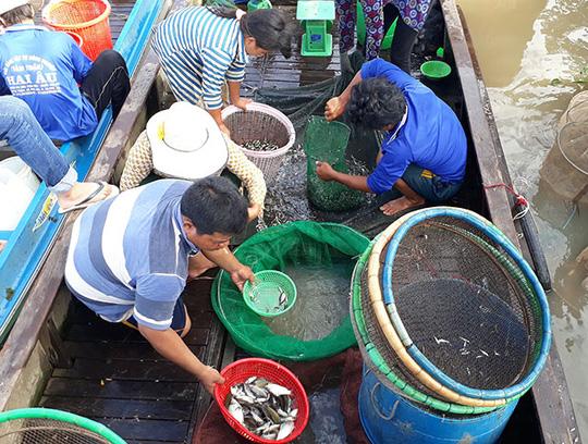 Chợ cá rặt đồng mùa nước nổi ở miền Tây - Ảnh 1.