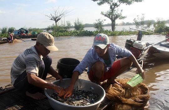 Chợ cá rặt đồng mùa nước nổi ở miền Tây - Ảnh 2.